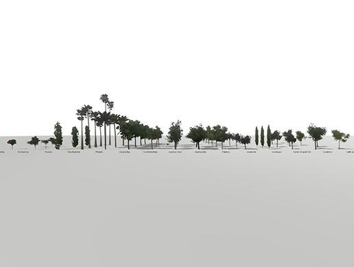 City & Park Trees