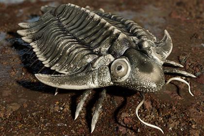 Trilobite 01 - Metopolichas