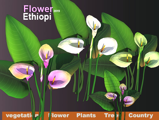 Flower Ethiopi