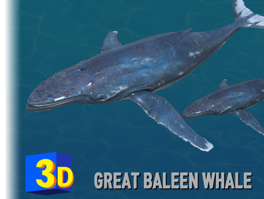 3D Great Baleen Whale