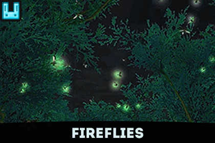 Insect Firefly