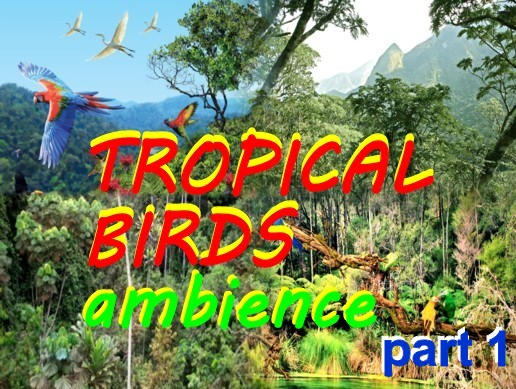 Tropical Birds ambience Part 1