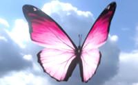 Butterflies pack 3D