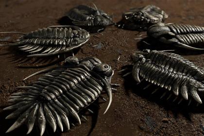 Trilobites Collection