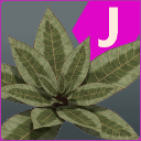 Exaggerated and Unique Foliage
