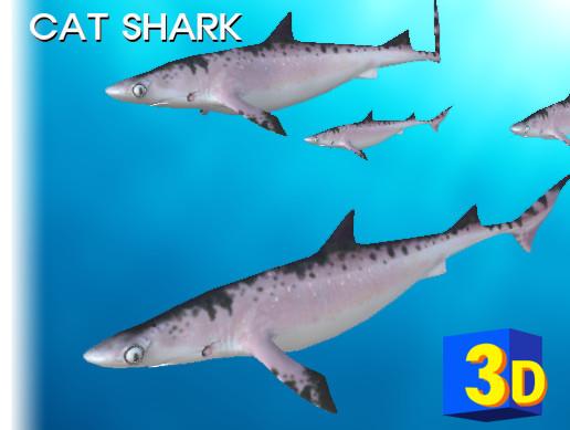 3D Cat Shark