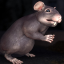 Common Fat Rat