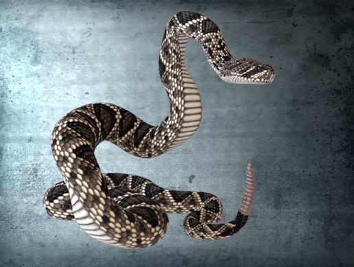 Animated Eastern Diamondback Rattlesnake PBR