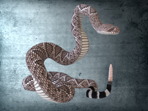 Animated Western Diamondback Rattlesnake PBR
