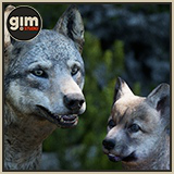 Animalia - Grey Wolf (pack)