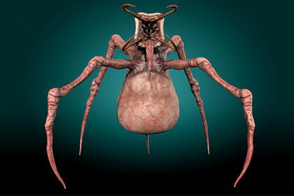 Poisonous Insect Monster