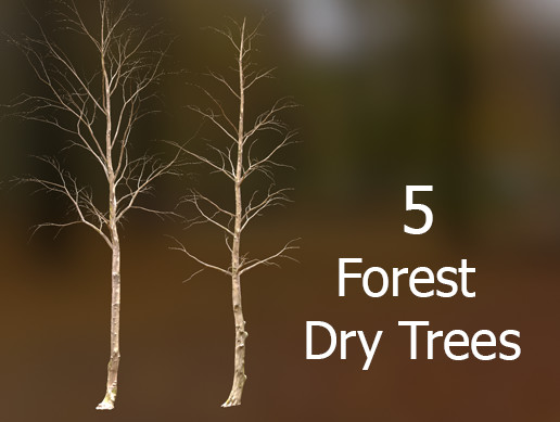 Forest Dry Trees