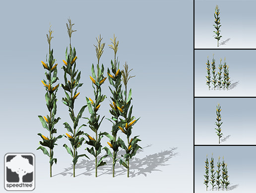 Corn Stalk Package