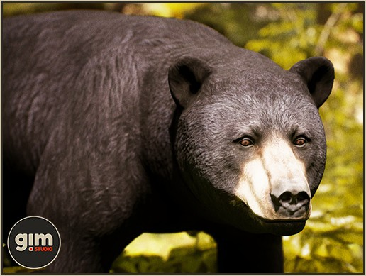 Animalia - Black Bear M