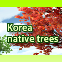 Korea native trees