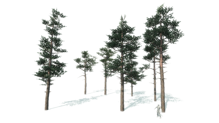 Scots Pine Trees Package - Asset Store