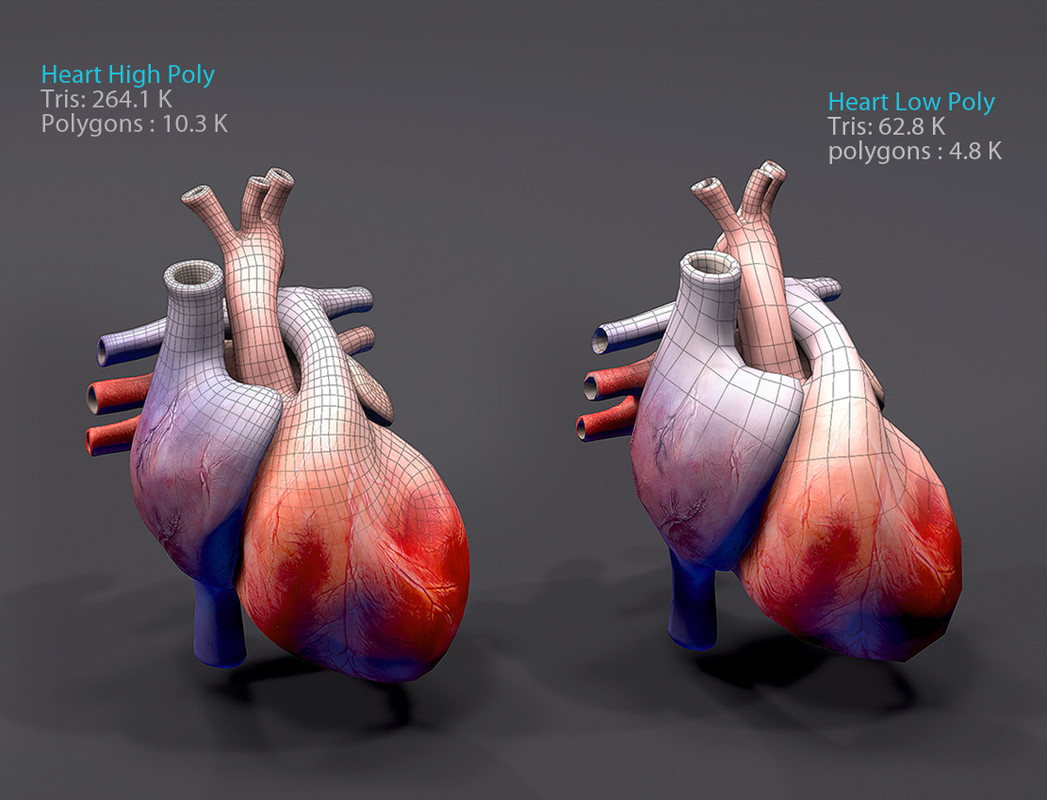 Heart Animated Realistic - Asset Store