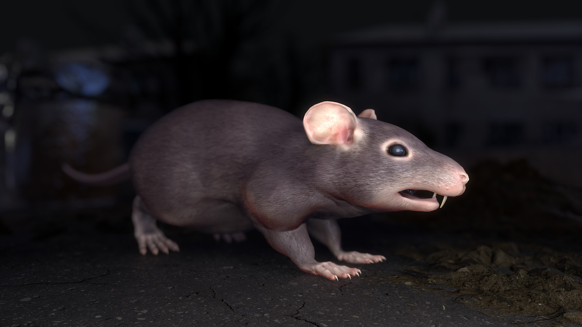 Rats Complete Pack