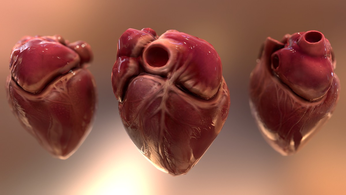 HQ Human Internal Organs